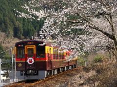 わ鉄にも桜の季節