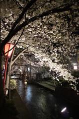 高瀬川(夜)