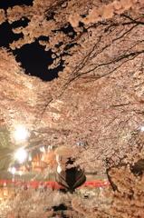 水の都の夜桜2