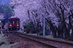 お花見電車2
