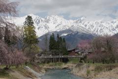 白馬三山と桜