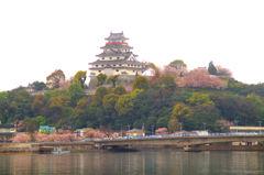 唐津城 桜に囲まれて