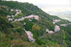 桜の咲く場所 鏡山のサクラロード