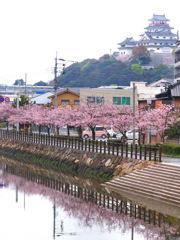 唐津城 二の門 桜並木