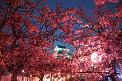 唐津城 夜桜