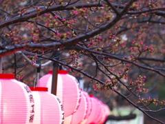あとは桜を待つばかり