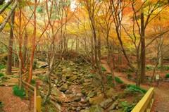 環境芸術の森 遊歩道