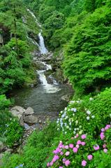 紫陽花と見帰の滝