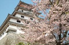 唐津城と桜 2019