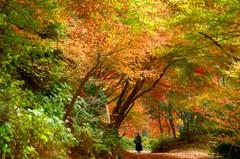 秋路を歩く