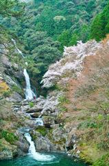 山桜と見帰りの滝