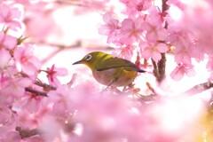 河津桜に囲まれて