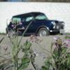 砂浜で花とmycar
