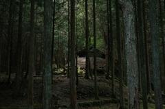 トトロの森の一軒家