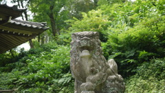 stone-carved guardian dogs