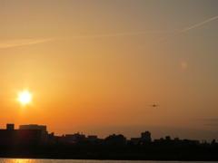 sunset with bule bird