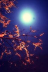 月夜に咲く雪