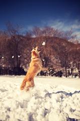 snow catching
