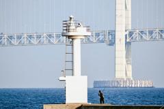 大架橋を釣る?