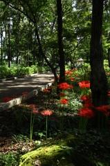 お気に入りの公園ー秋を感じて