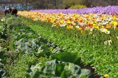 春の色、春の味