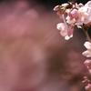 春陽に輝いて