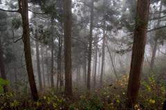 杉林の中にて