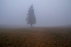 霧の一本杉