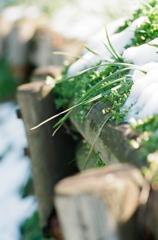 雪ニモマケヌ