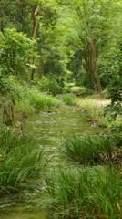 新緑の小川