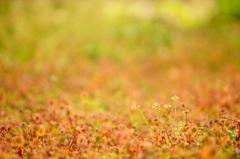 春待つ草原