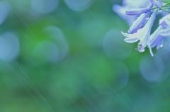 雨と光の共演(harmony)
