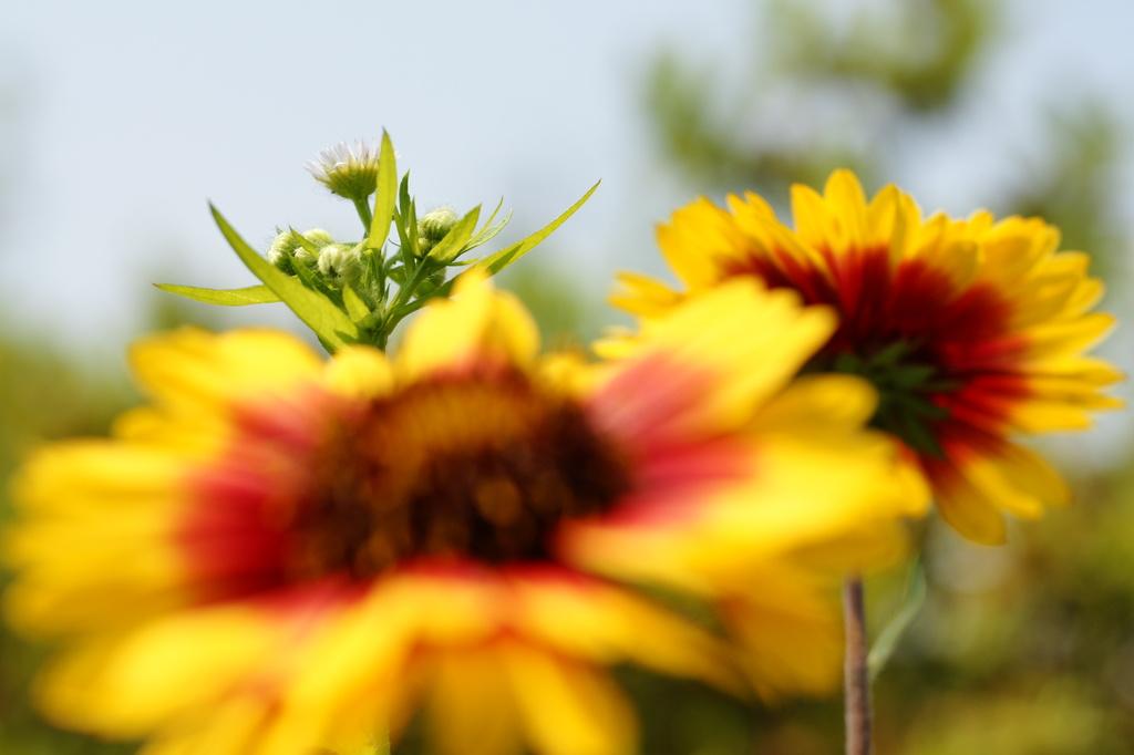 花の向こう