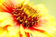 花のアップ2
