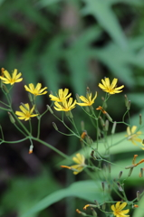高尾山で見つけた花