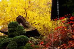 201011報国寺黄と紅と