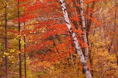 秋は過ぎ行く