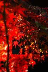 2007秋紅葉8