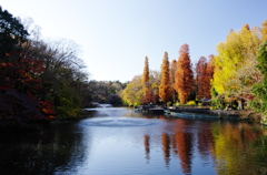 公園の秋Ⅲ