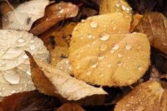 雨粒の楽しみ