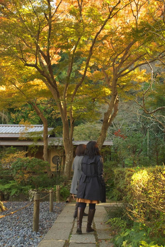 名残紅葉逍遥Ⅱ(瑞泉寺)