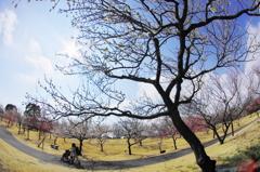 春が来た(小田原フラワーガーデン)