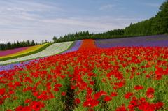 想い出の北海道2