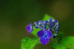 椎葉の花笠