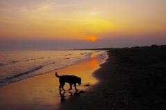 水辺の季節(砂の感触)