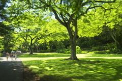 常夏の緑陰