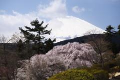 富士憧憬Ⅸ(富士霊園)