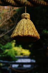 鎌倉紅葉情報Ⅵ(八雲神社)