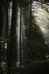 木霊のささやき