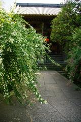 二色で 導かれし行く 萩の寺(鎌倉萩情報Ⅳ)